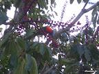 Kleiner bunter Papagei