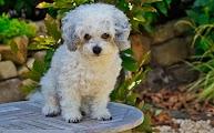 Perritos en Gonzalez H www.haiskelgonzalez.com.ve
