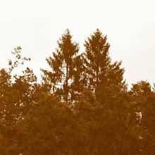 Taborjenje, Lahinja 2005 1. del - img_0866.jpg