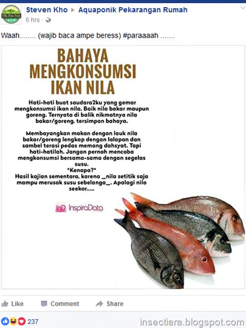 Bahaya mengkonsumsi ikan nila