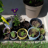 Gardening 2010, Part Three - 101_5142.JPG