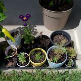 Gardening 2010, Part Three - 101_5142.JPG