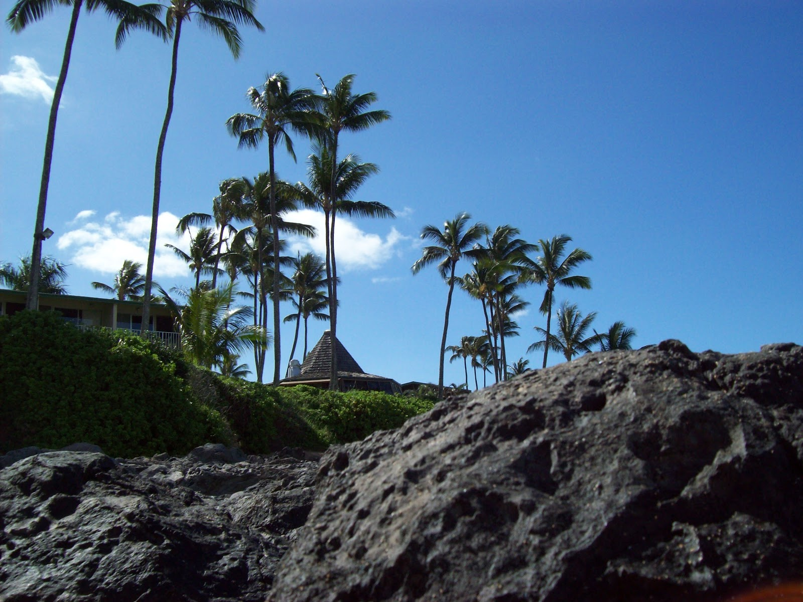 Hawaii Day 6 - 100_7689.JPG