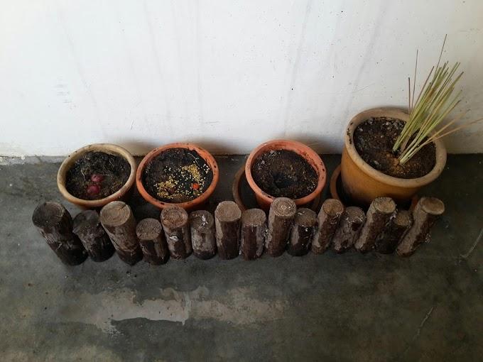 Taman Mini Hijaukan Alam Di Rumah Apartment
