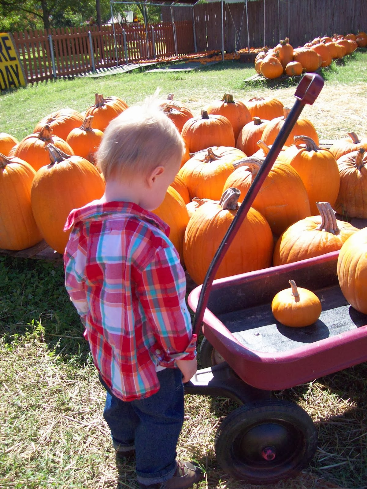 Pumpkin Patch - 114_6564.JPG