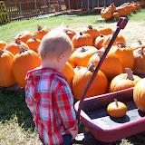 Pumpkin Patch - 114_6564.JPG