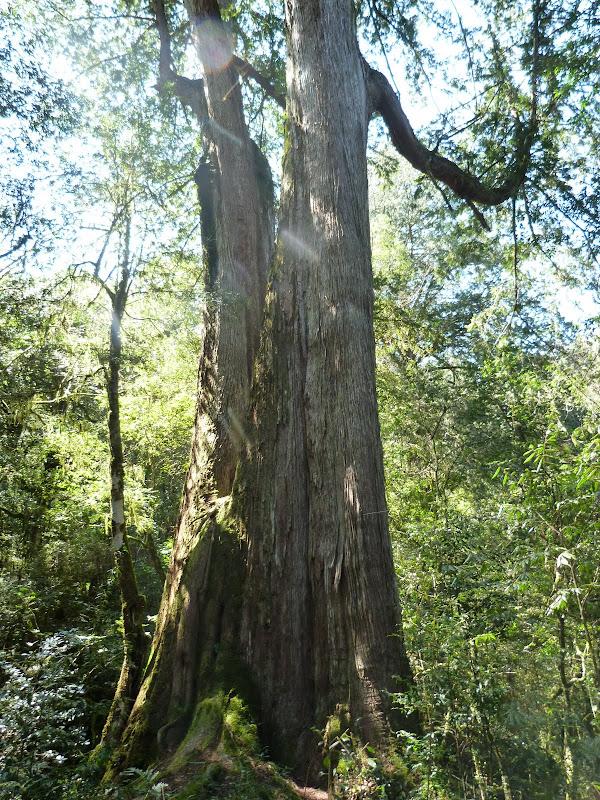 TAIWAN. Dans une region ou habitent les aborigenes de l ethnie Atayal - P1110787.JPG