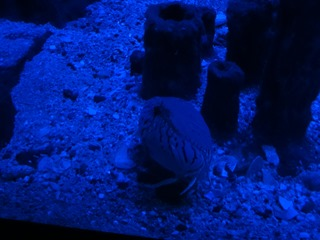 2016.05.01-010 crabe