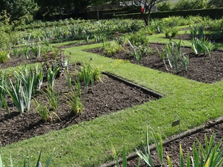 2016.08.05-037 jardin d'iris