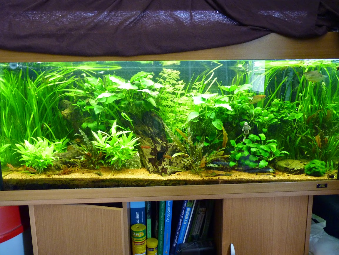 Ma petit histoire Aquariophile de 2009 à aujourd'hui  P1060160