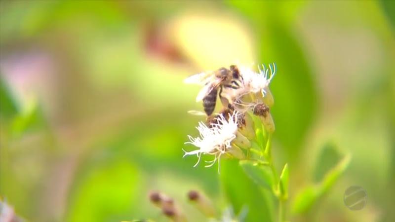 apicultura-deciolandia-2-1024x576