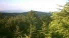 Beynam Ormanları