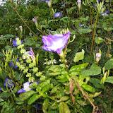 Gardening 2014 - 116_5267.JPG