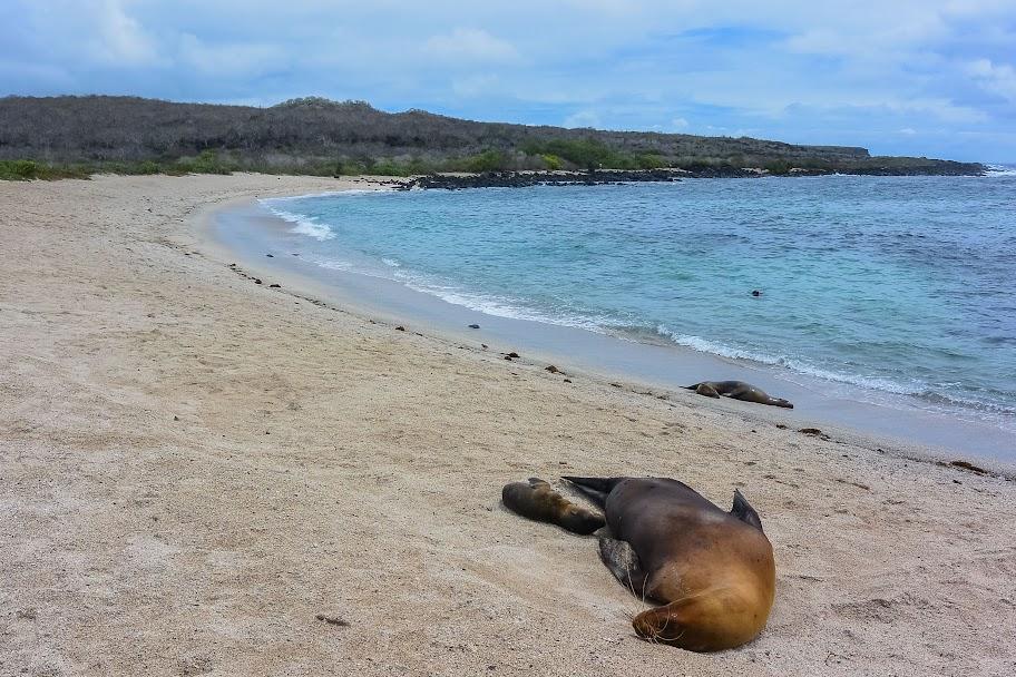 galapagos - Galapagos_FB_2-142.jpg