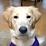 Randy Wiles's profile photo