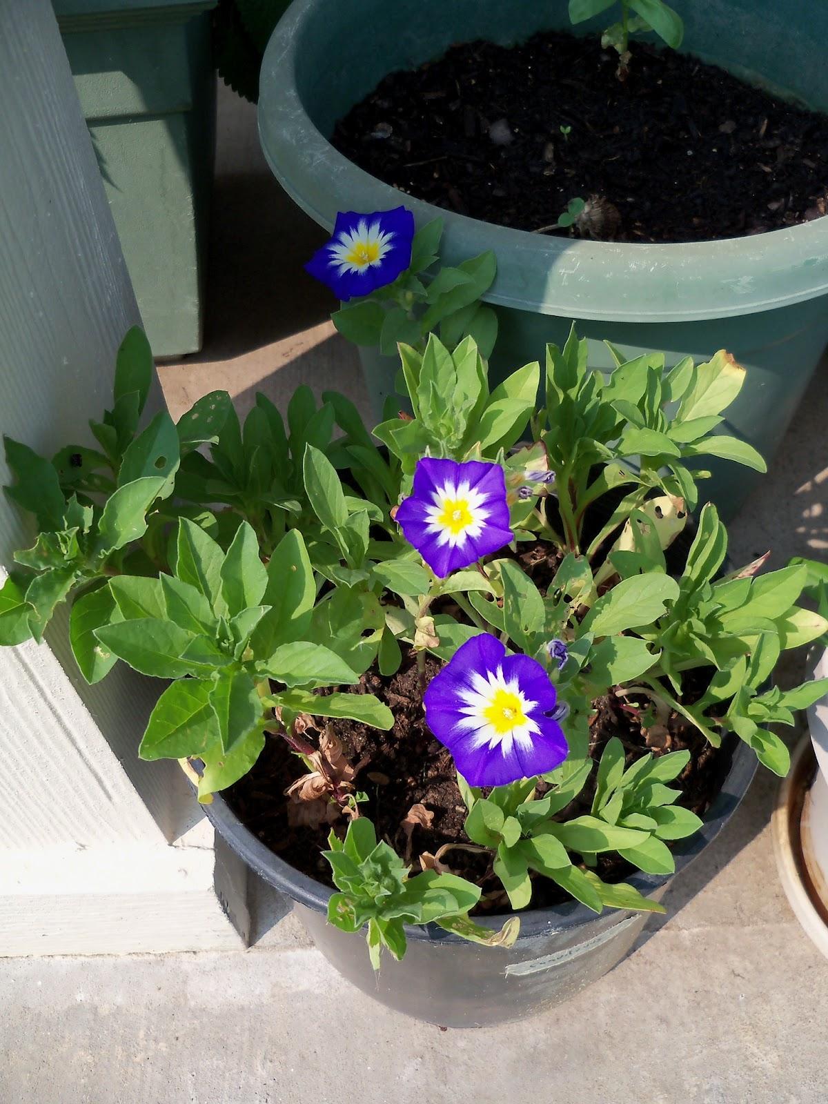 Gardening 2011 - 100_9287.JPG