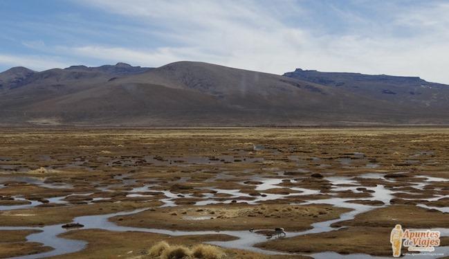 Vicuñas Volcanes Arequipa Chivay Perú 23