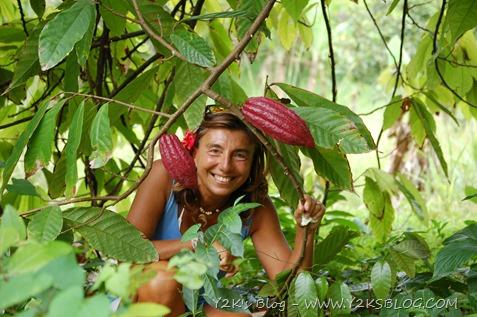 Bacche di cacao - Dominica