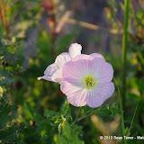 2013 Spring Flora & Fauna - IMGP6333.JPG