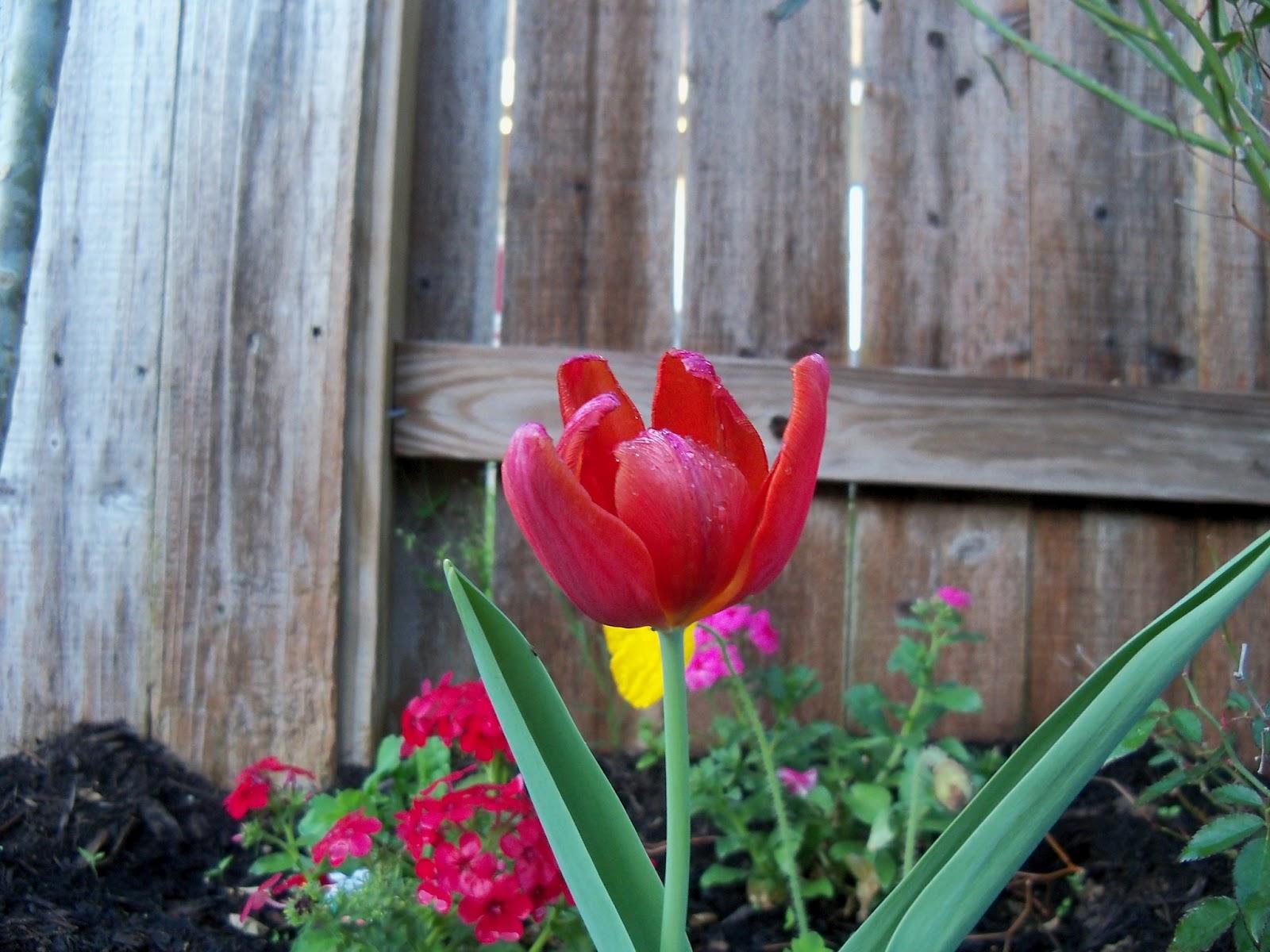 Gardening 2011 - 100_6766.JPG