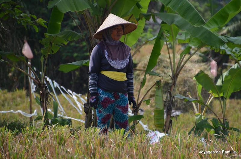 Women in the fields