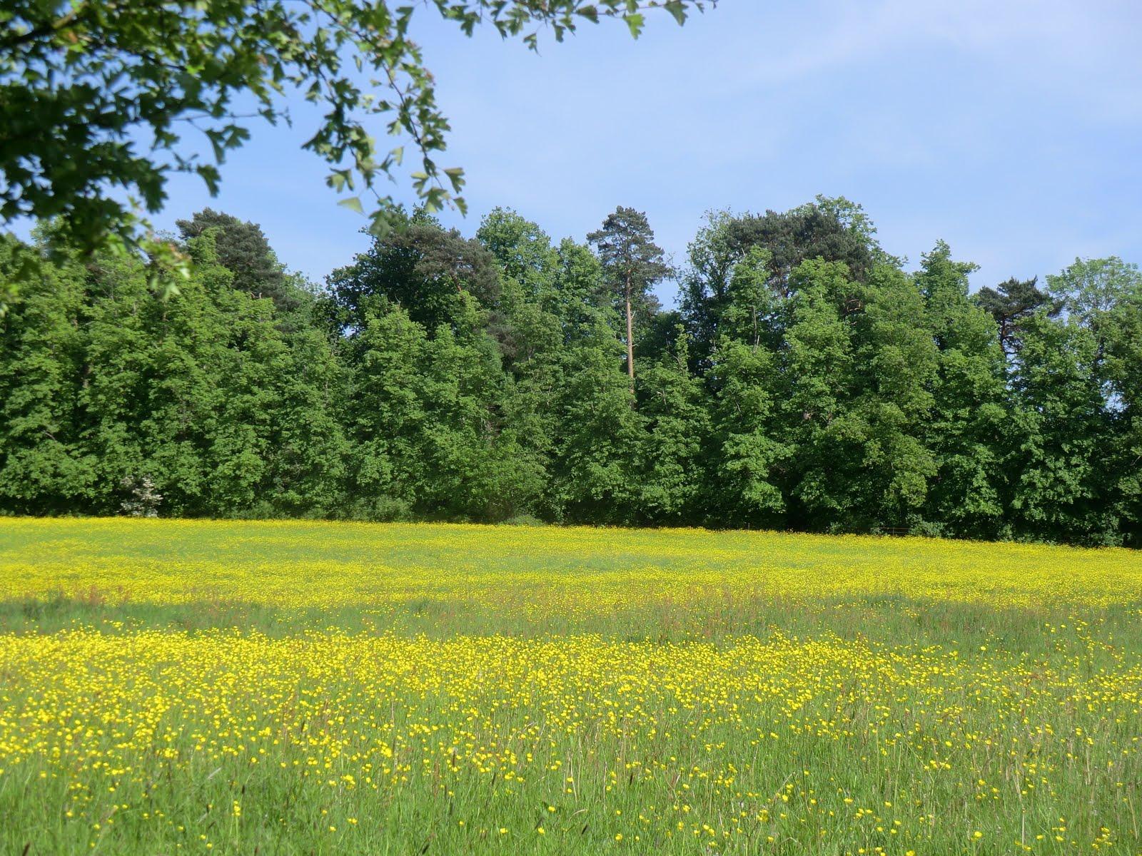 CIMG1479 Wildflower meadow