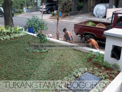 Tukang Taman Murah Di Bogor - Proses Pembuatan Taman Rumput Halaman Rumah