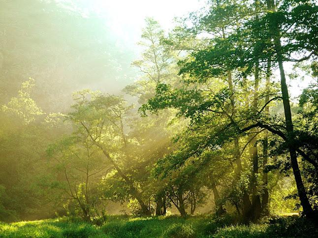 ...El color de la naturaleza... Mlha+v+%C3%BAdol%C3%AD