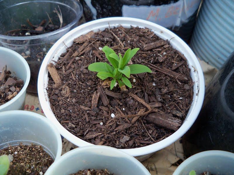 Gardening 2010 - 101_1658.JPG