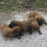 fotos caninas 164.jpg