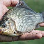 20140817_Fishing_Pugachivka_031.jpg