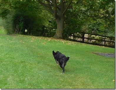 8 chasing ball lock 10