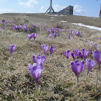 2011 2-3 aprilie 011.jpg