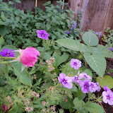 Gardening 2011 - 100_8853.JPG