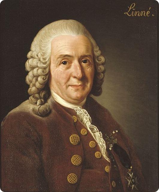 Carl_von_Linné