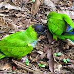 Brasilien - Foz do Iguazu - Vogelpark