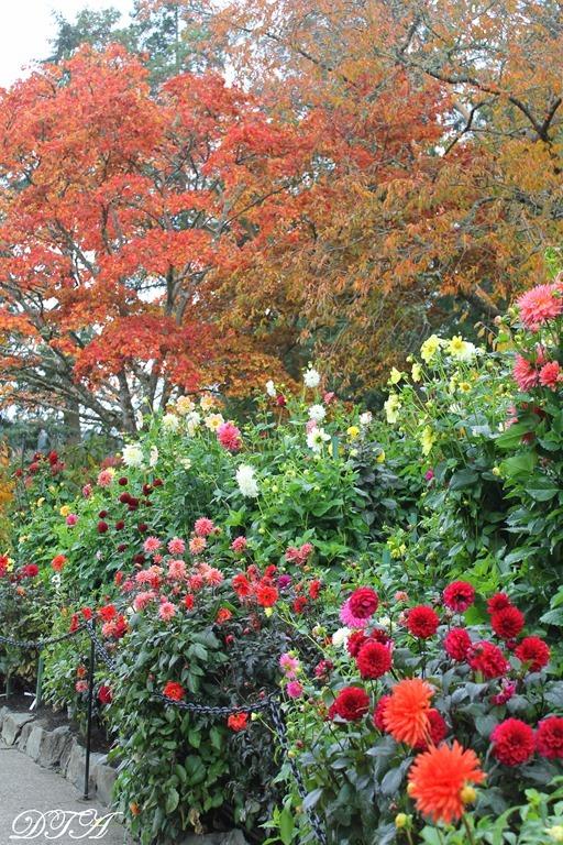 Butchart Gardens Sooke 215