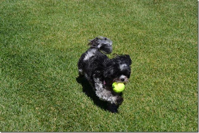 5-Ways-To-Celebrate-National-Dog-Week (20)