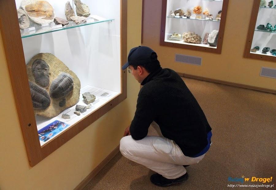 Muzeum Minerałów w Świętej Katarzynie - skamieniałości
