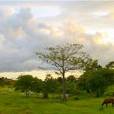 Prairies. Colider (Mato Grosso, Brésil), 20 juillet 2010. Photo : Cidinha Rissi
