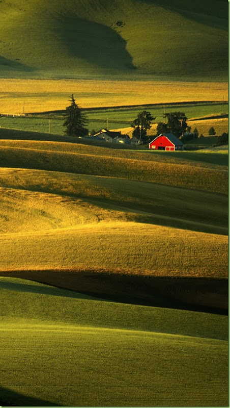 Palouse Hills At Sunrise