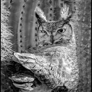 Great Horned Owl-51.jpg
