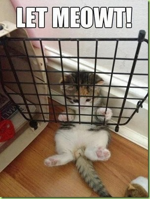 kitty caged