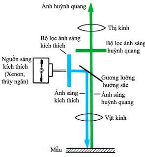 Kính hiển vi quang học, cấu tạo, nguyên tắc hoạt động