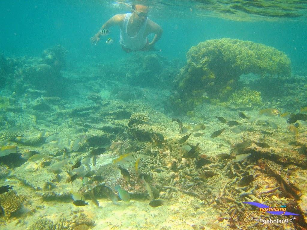 pulau harapan 8-9 nov 2014 diro 22