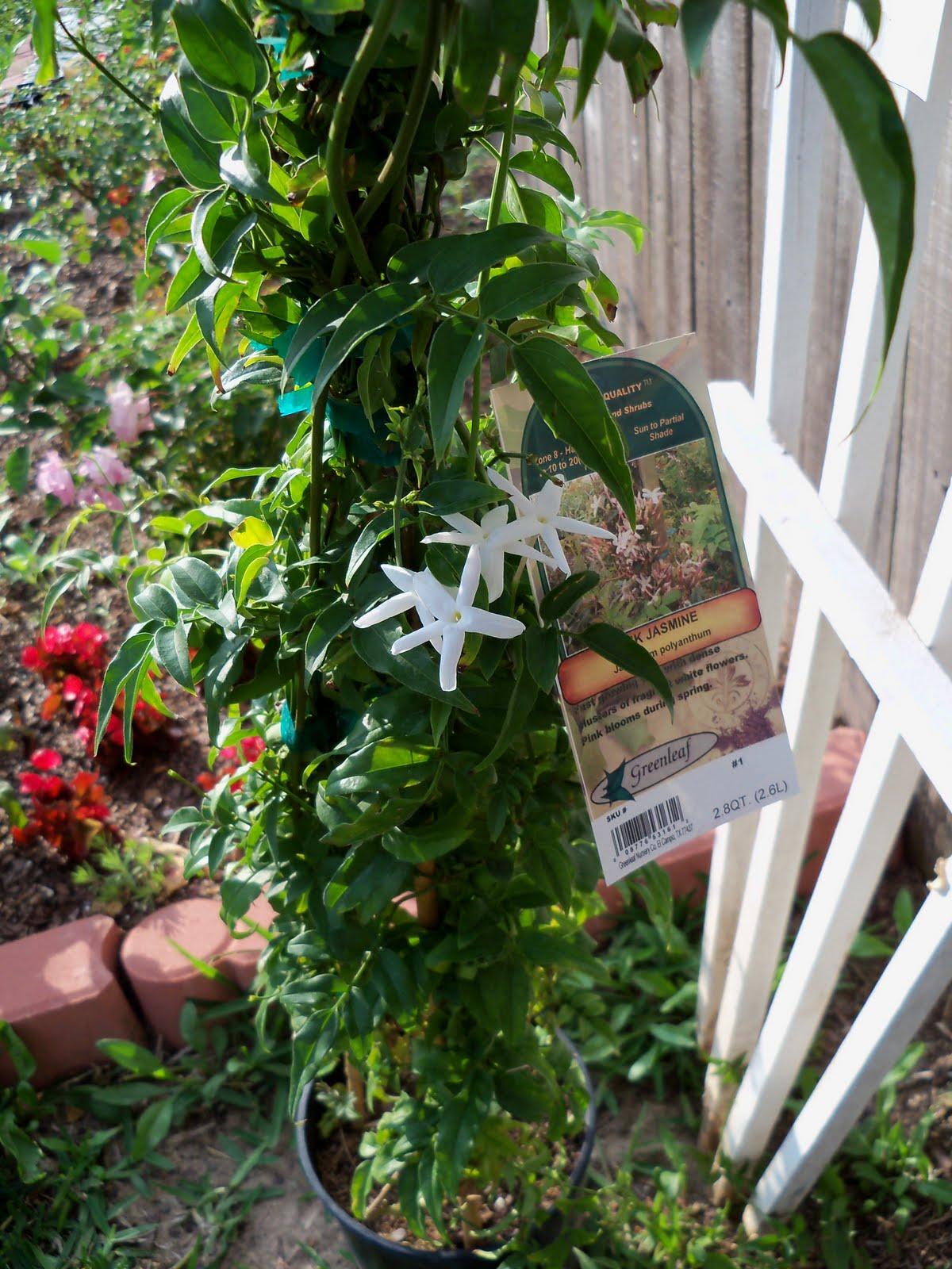Gardening 2010 - 101_1232.JPG