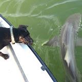 Lola at Dave's Bull Shark.jpg