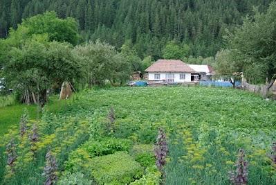 Großer Garten in Bistricioara