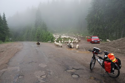 Schafe am Pasul Tarnita