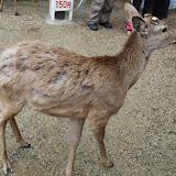 2014 Japan - Dag 8 - jordi-DSC_0422.JPG